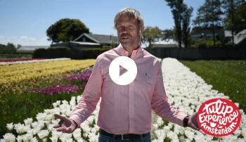 Welkom bij de Tulip Experience